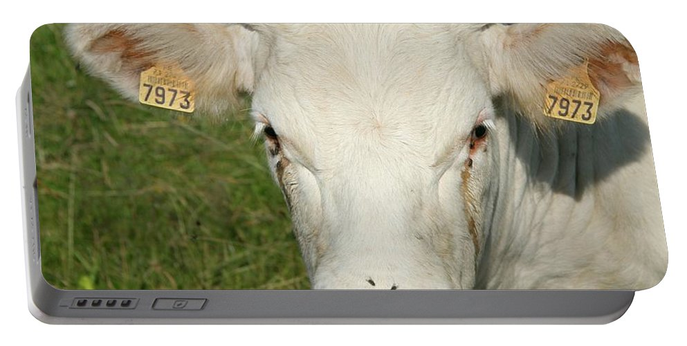 Cow Portable Battery Charger featuring the photograph Charolais Cow by Christiane Schulze Art And Photography