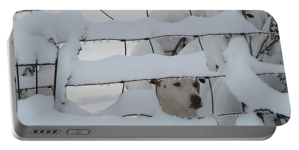 Fence Portable Battery Charger featuring the photograph Checking On The Neighbors by Karen Beasley