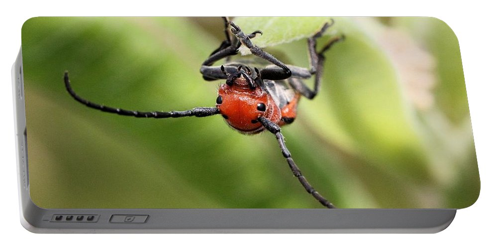 Red Milkweed Beetle Portable Battery Charger featuring the photograph Checking Out The Photographer by Doris Potter