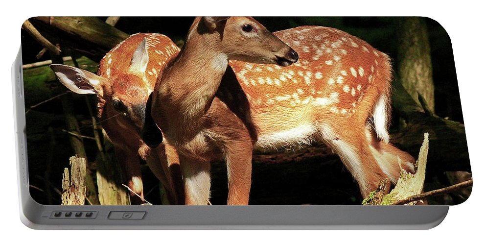 Fawn Portable Battery Charger featuring the photograph Checking The Back Trail by Douglas Stucky