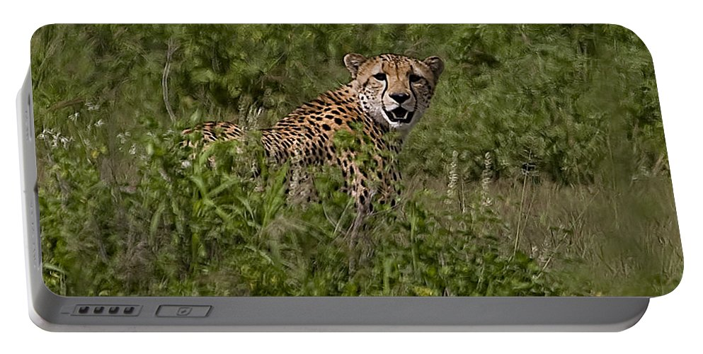Acinonyx Jubatus Portable Battery Charger featuring the photograph Cheetah  #0095 by J L Woody Wooden