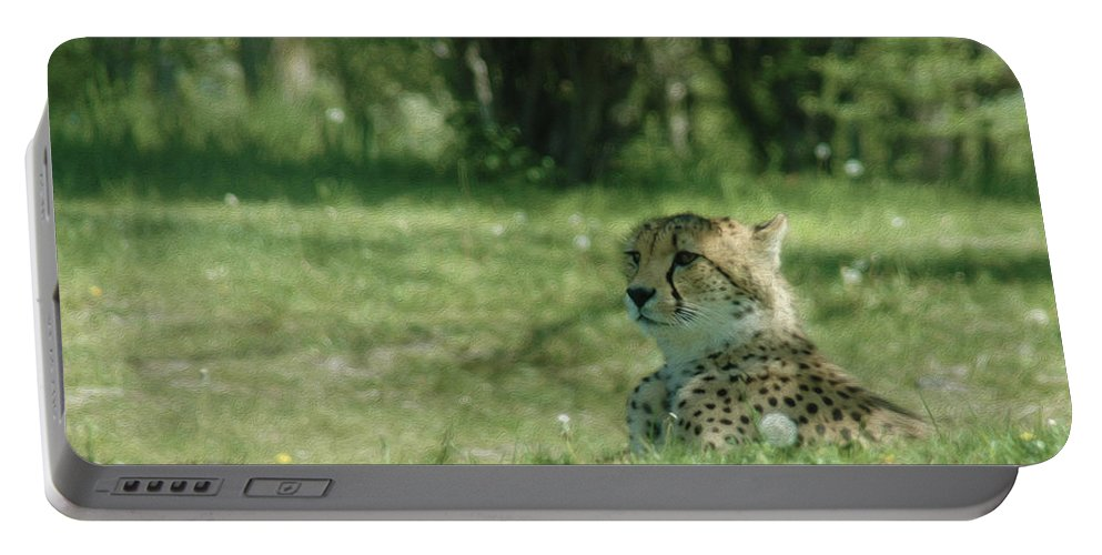 Cheetah At Rest Portable Battery Charger featuring the photograph Cheetah At Attention by Tracy Winter