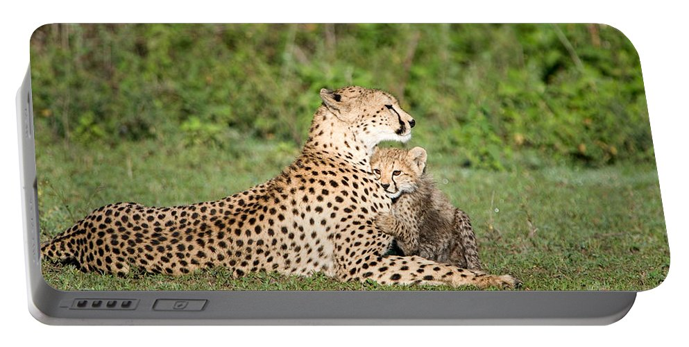 Photography Portable Battery Charger featuring the photograph Cheetah Cub Acinonyx Jubatus Playing by Panoramic Images
