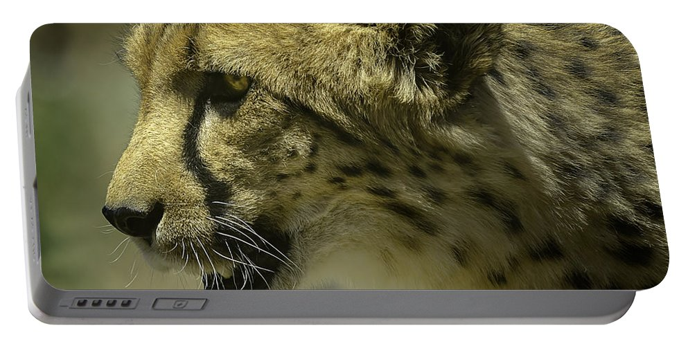 Cheetah Portable Battery Charger featuring the photograph Cheetah On The Prowl by LeeAnn McLaneGoetz McLaneGoetzStudioLLCcom