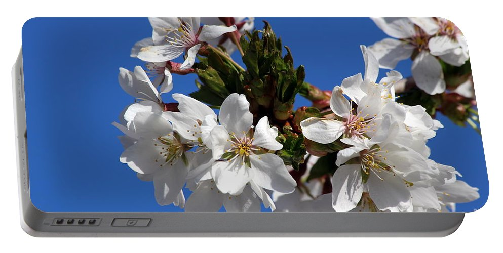 Cherry Portable Battery Charger featuring the photograph Cherry Blossom Blue Sky - 1 by Kenny Glotfelty