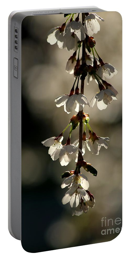 Cherry Portable Battery Charger featuring the photograph Cherry Blossom Bokeh by Kenny Glotfelty
