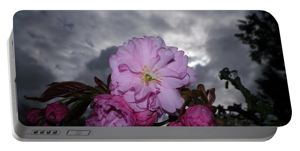 Cherry Blossom Tree Flash Macro Storm Stormy Grey Gray Clouds Dark Pink Spring Sky Skies Unusual Plant Plants Devon Serene Lowering Portable Battery Charger featuring the photograph Cherry Blossom by Richard Brookes