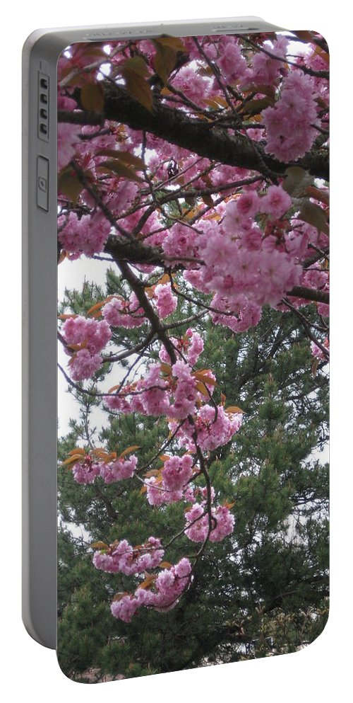 Cherry Blossoms Portable Battery Charger featuring the photograph Cherry Blossoms 1 by David Trotter