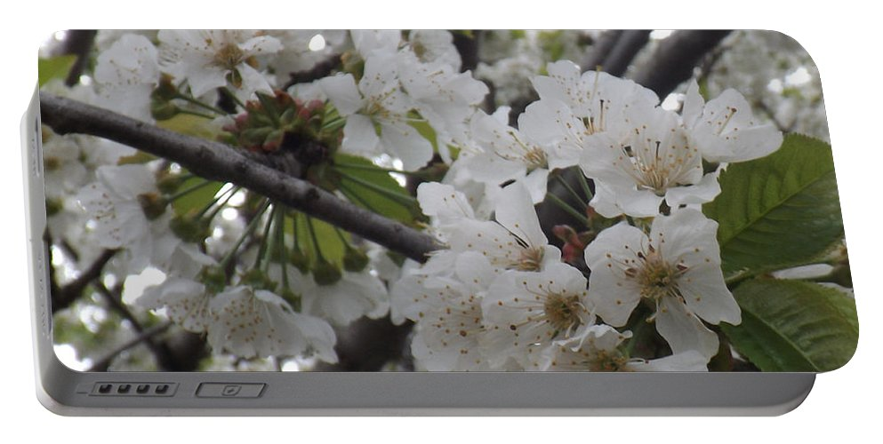 Cherry Portable Battery Charger featuring the photograph Cherry Blossoms Branching Out by Brenda Brown