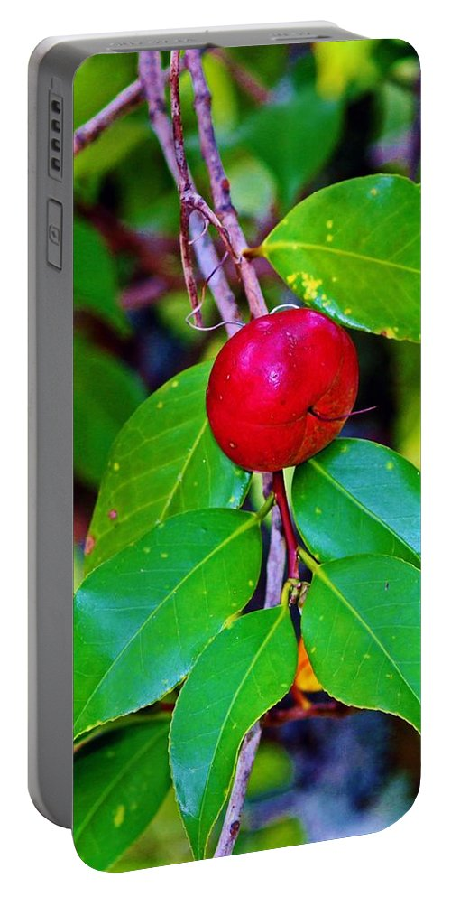 Cherry Portable Battery Charger featuring the photograph Cherry by Cynthia Guinn