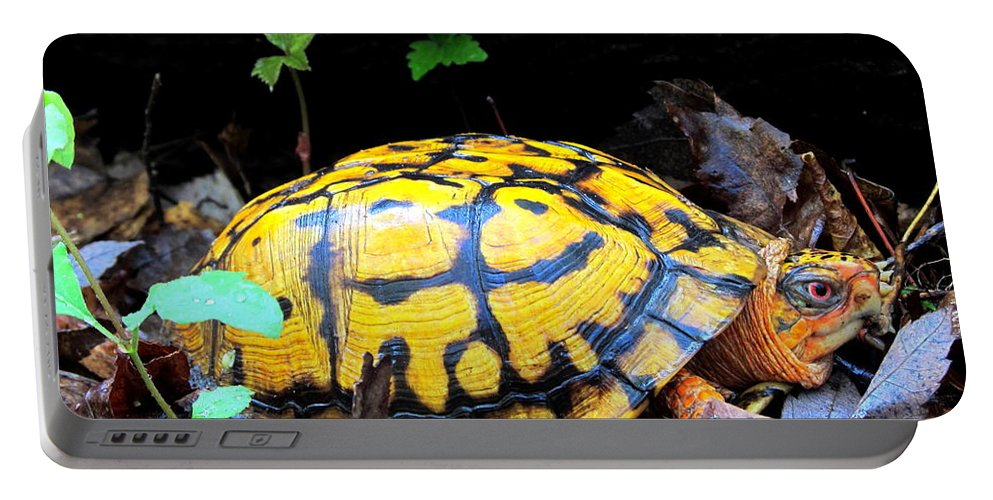 Yellow Box Turtle Portable Battery Charger featuring the photograph Chesapeake Box Turtle by Joshua Bales