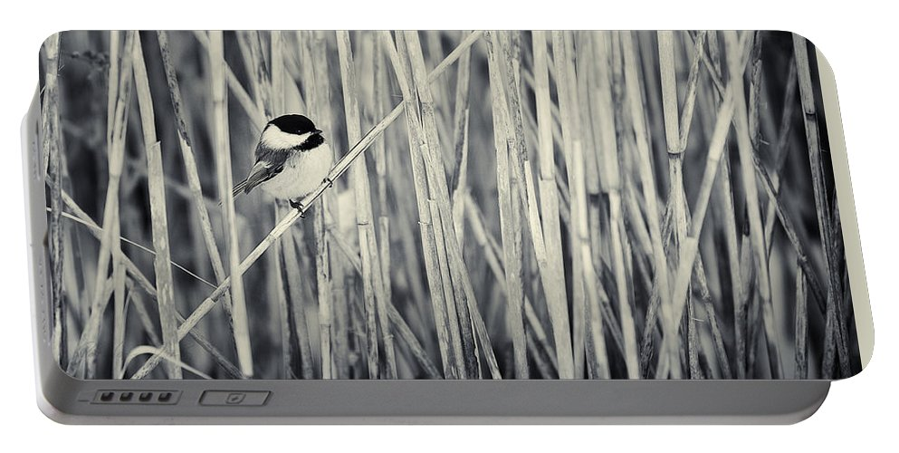 Bird Portable Battery Charger featuring the photograph Chickadee In The Redds by Peter v Quenter