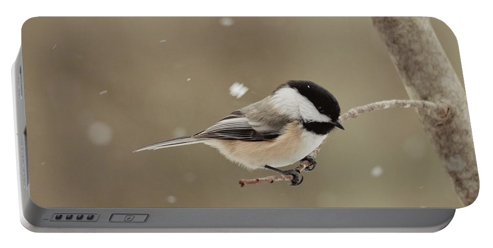 Landscapes Portable Battery Charger featuring the photograph Chickadee In The Snow by Cheryl Baxter