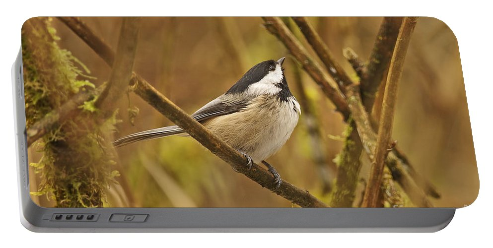Chickadee Portable Battery Charger featuring the photograph Chickadee On Alert by Sharon Talson