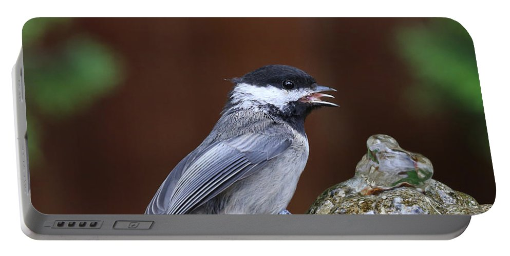 Chickadee Portable Battery Charger featuring the photograph Chickadee by Paul Fell