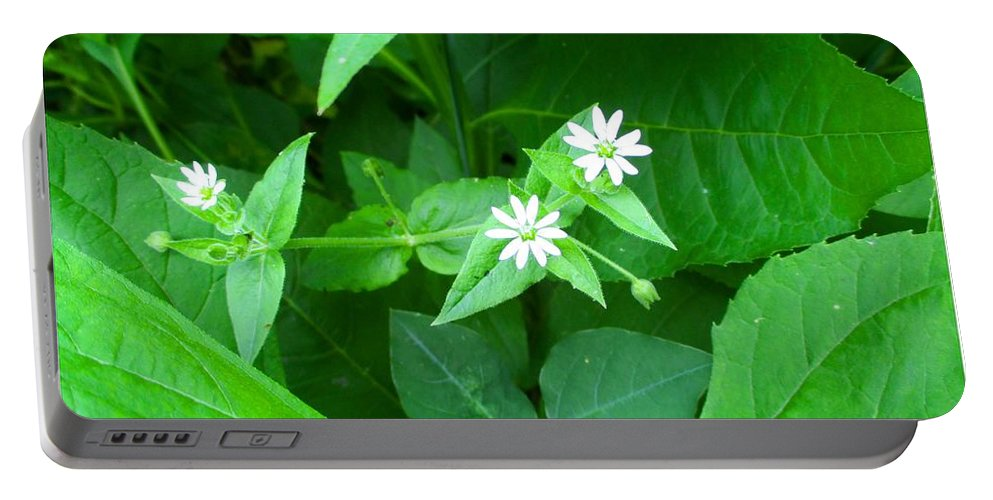 Chickweed Portable Battery Charger featuring the photograph Chickweed Trio by Kendall Kessler