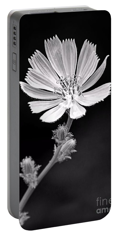 Chicory Portable Battery Charger featuring the photograph Chicory Wildflower by Sharon Woerner