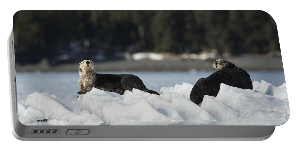 Otter Portable Battery Charger featuring the photograph Chilling by Ted Raynor