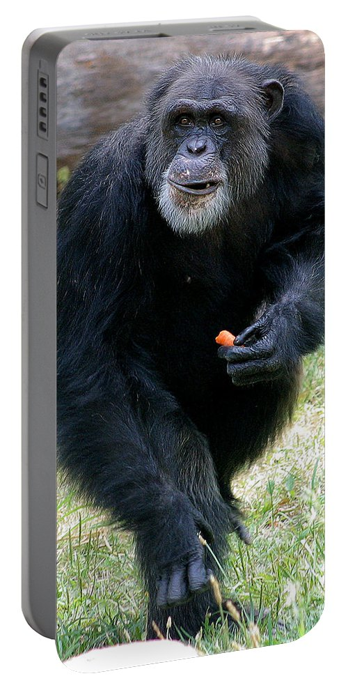 Chimp Portable Battery Charger featuring the photograph Chimpanzee-5 by Gary Gingrich Galleries