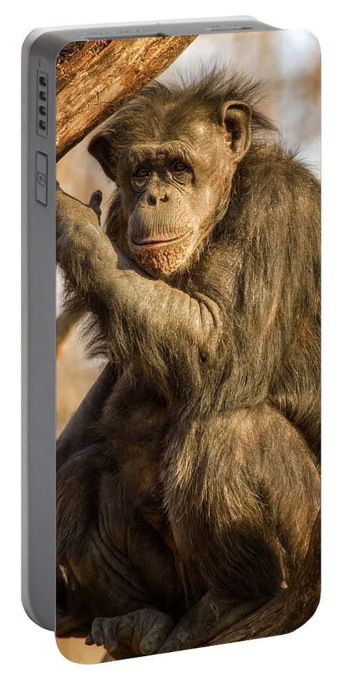 Chimp Portable Battery Charger featuring the photograph Chimpanzee  by Linda Tiepelman