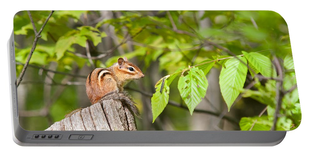 Chippy Portable Battery Charger featuring the photograph Chipmunk Shares Fence Post by Timothy Flanigan and Debbie Flanigan