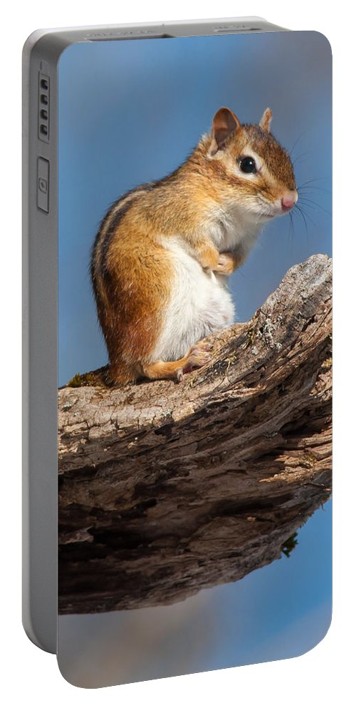 Animal Portable Battery Charger featuring the photograph Chipmunk Sunning by Richard Kitchen