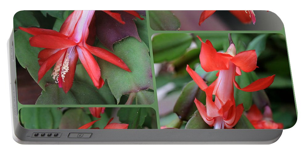 Christmas Cactus Portable Battery Charger featuring the photograph Christmas Cactus Collage by Carol Groenen
