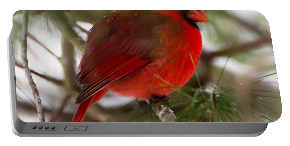 Christmas Cardinal Portable Battery Charger featuring the photograph Christmas Cardinal by Kerri Farley