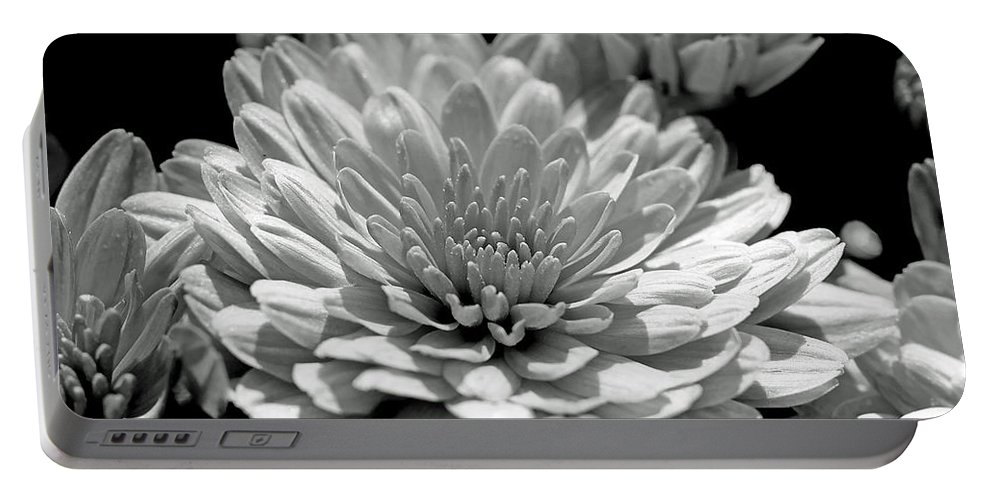 Chrysanthemum Portable Battery Charger featuring the photograph Chrysanthemum In Light And Shadow by Mother Nature