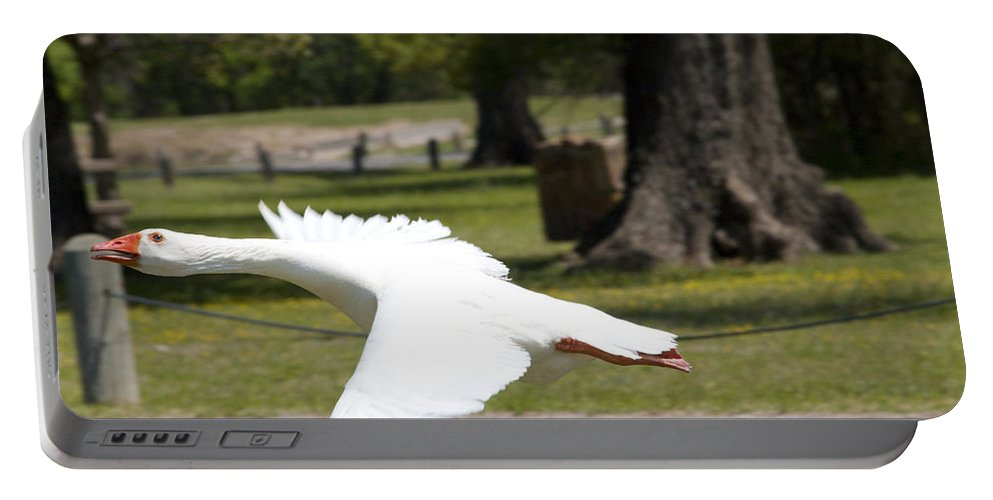 Great Blue Heron Photographs Portable Battery Charger featuring the photograph Chuck Flies I by Vernis Maxwell