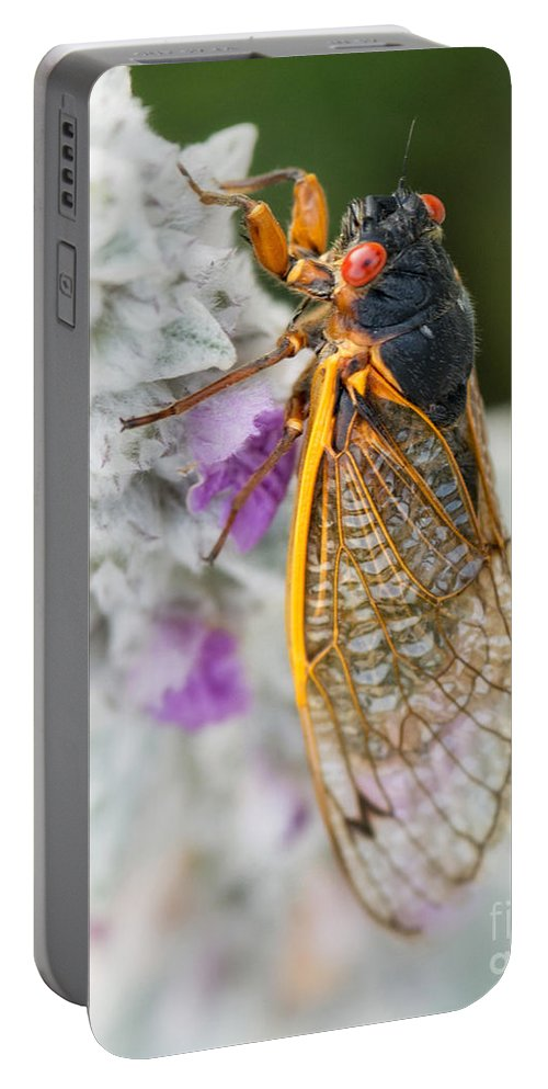 Cicada Portable Battery Charger featuring the photograph Cicada by Claudia Kuhn