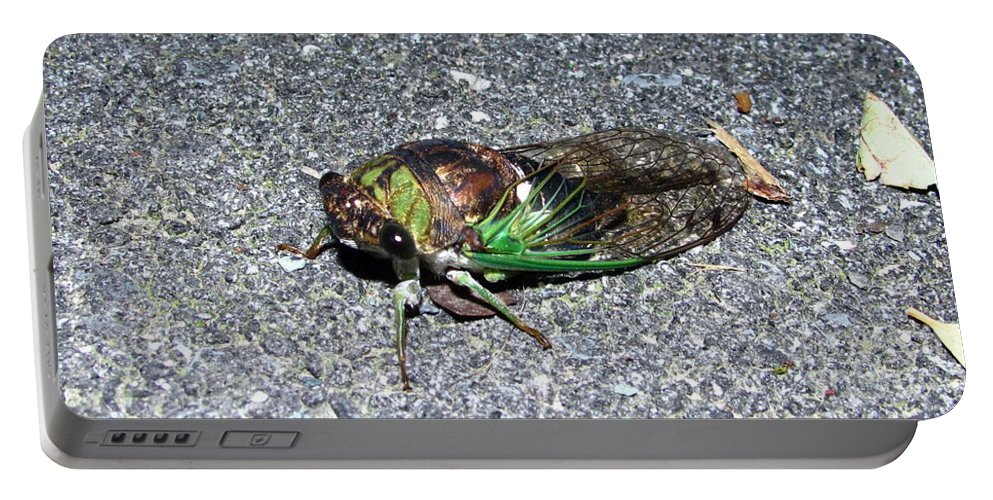 Cicada Images Cicada Pics Cicada Prints Insect Forest Sounds Entomology Biodiversity Food Chain Conservation Preservation Portable Battery Charger featuring the photograph Cicada by Joshua Bales