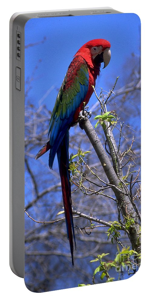 Bird Portable Battery Charger featuring the photograph Cincy Parrot by Gary Gingrich Galleries