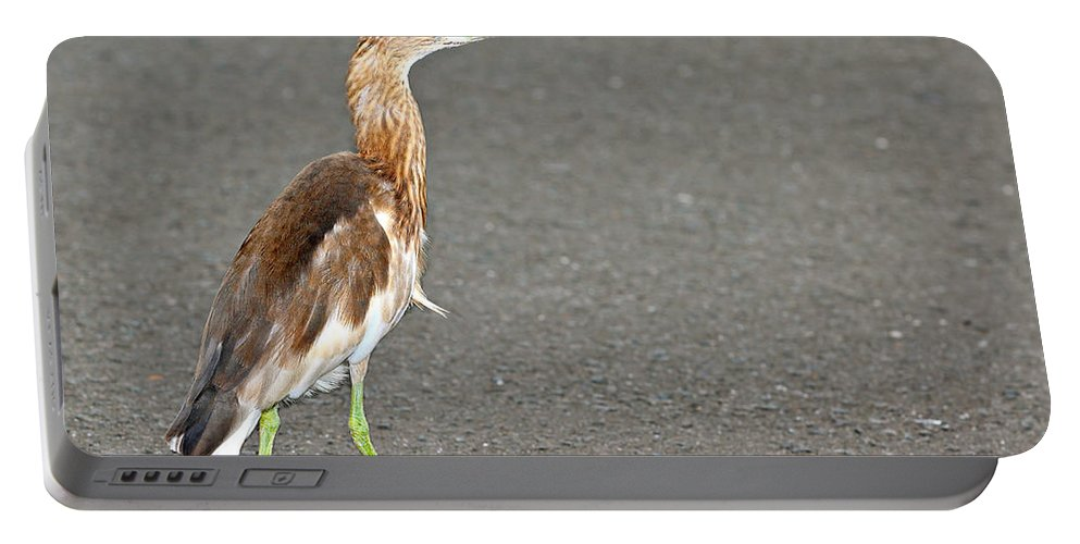 Adult Portable Battery Charger featuring the photograph Cinnamon Chestnut Bittern by Paul Fell