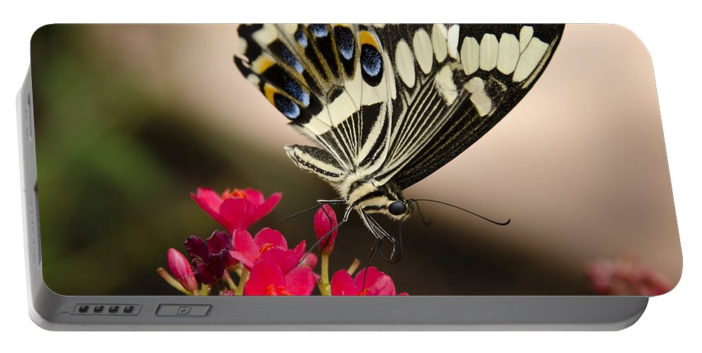 Black And White Butterfly Portable Battery Charger featuring the photograph Citrus Swallowtail by Saija Lehtonen
