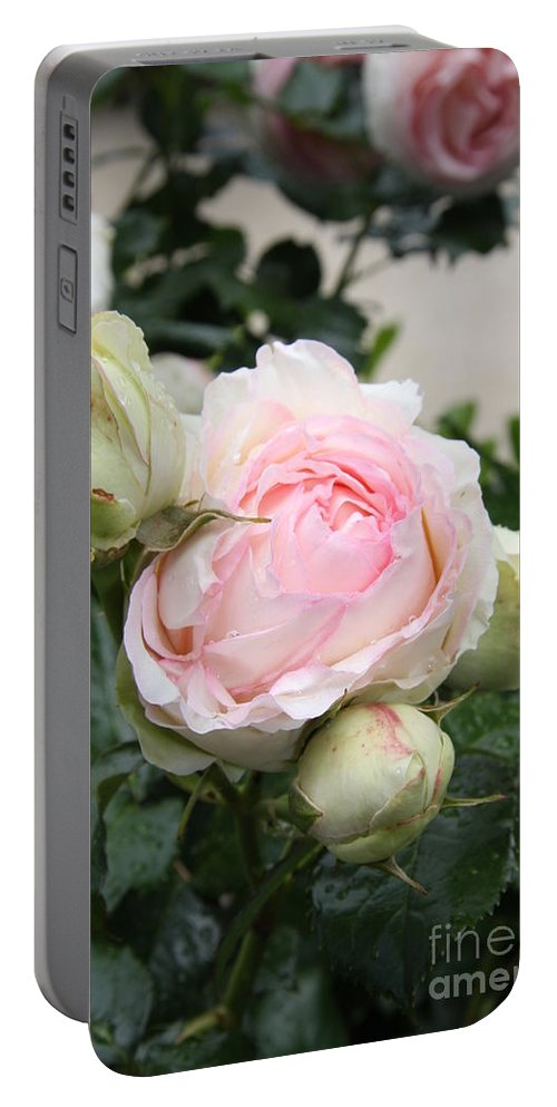 Roses Portable Battery Charger featuring the photograph Classic Rose by Christiane Schulze Art And Photography