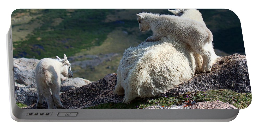 Mountain Goats; Posing; Group Photo; Baby Goat; Nature; Colorado; Crowd; Baby Goat; Mountain Goat Baby; Happy; Joy; Nature; Brothers Portable Battery Charger featuring the photograph Climb On by Jim Garrison