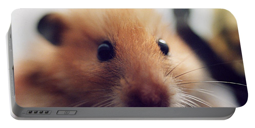 Teddy Portable Battery Charger featuring the photograph Close Friend by Philip Ralley