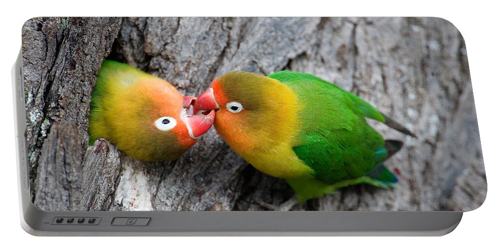 Photography Portable Battery Charger featuring the photograph Close-up Of A Pair Of Lovebirds, Ndutu by Panoramic Images