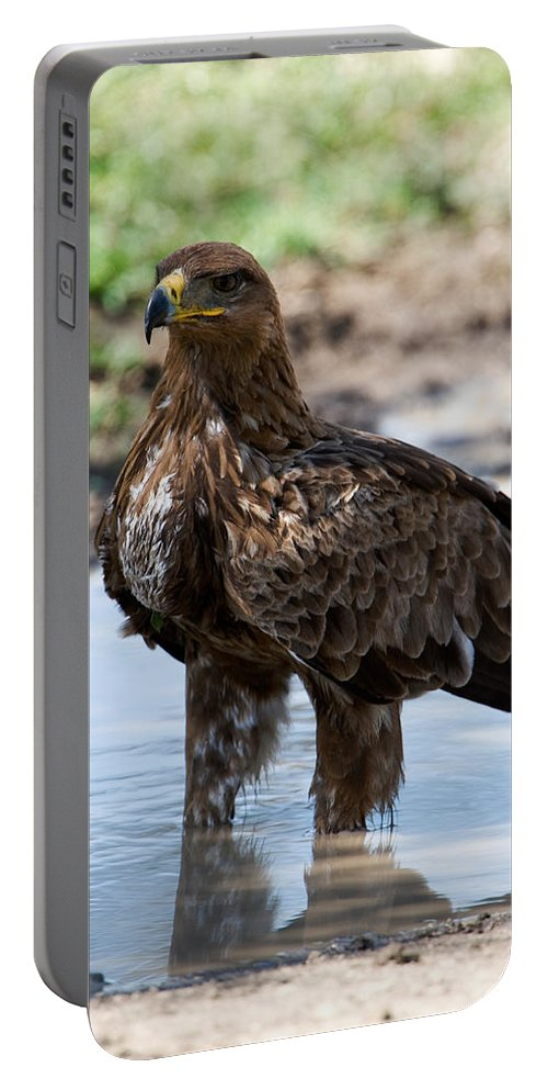 Photography Portable Battery Charger featuring the photograph Close-up Of A Tawny Eagle Aquila Rapax by Panoramic Images