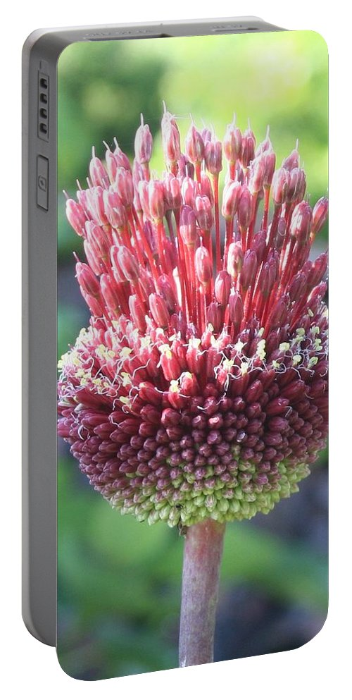Allium Sphaerocephalon Portable Battery Charger featuring the photograph Close Up Of An Ornamental Onion Or Drumstick Allium by Taiche Acrylic Art