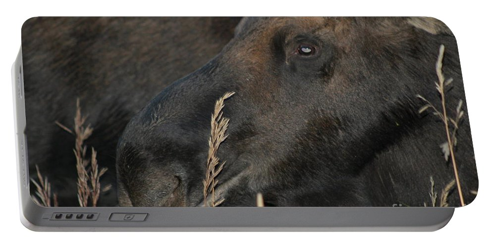 Bull Moose Portable Battery Charger featuring the photograph Close Up View by Fiona Kennard