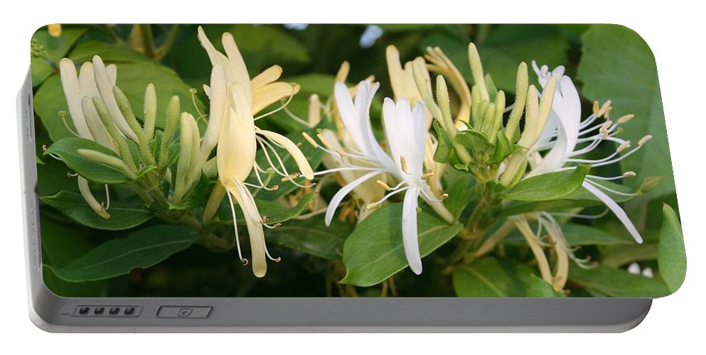 Flower Portable Battery Charger featuring the photograph Closeup Shot Of Lonicera European Honeysuckle Flower by Taiche Acrylic Art