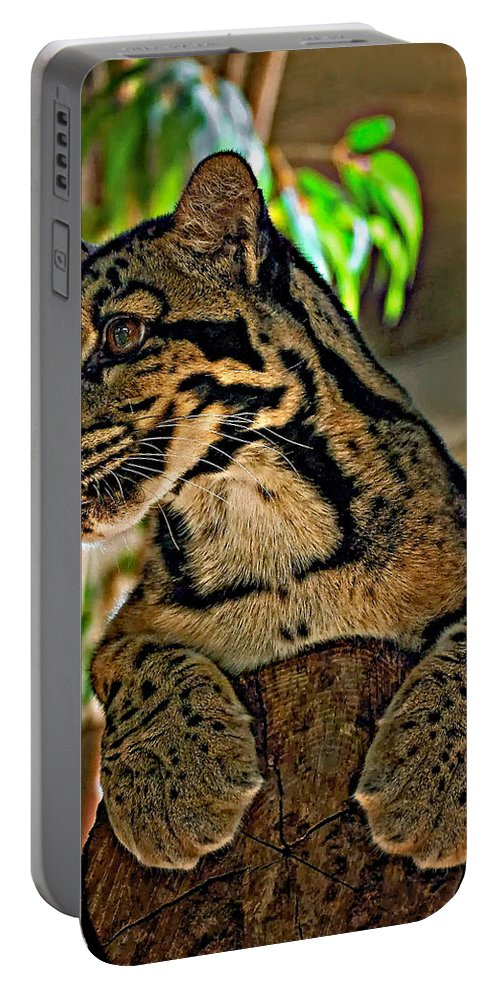 Clouded Leopard Portable Battery Charger featuring the photograph Clouded Leopard by Steve Harrington