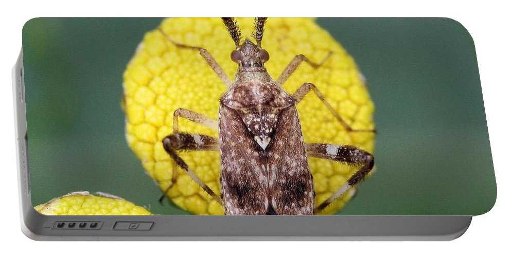 Neurocolpus Nubilus Portable Battery Charger featuring the photograph Clouded Plant Bug On Tansy by Doris Potter
