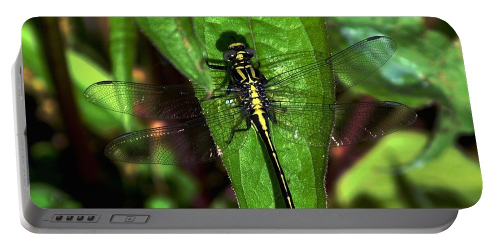Color Photography Portable Battery Charger featuring the photograph Club Tailed Dragonfly by Sue Stefanowicz