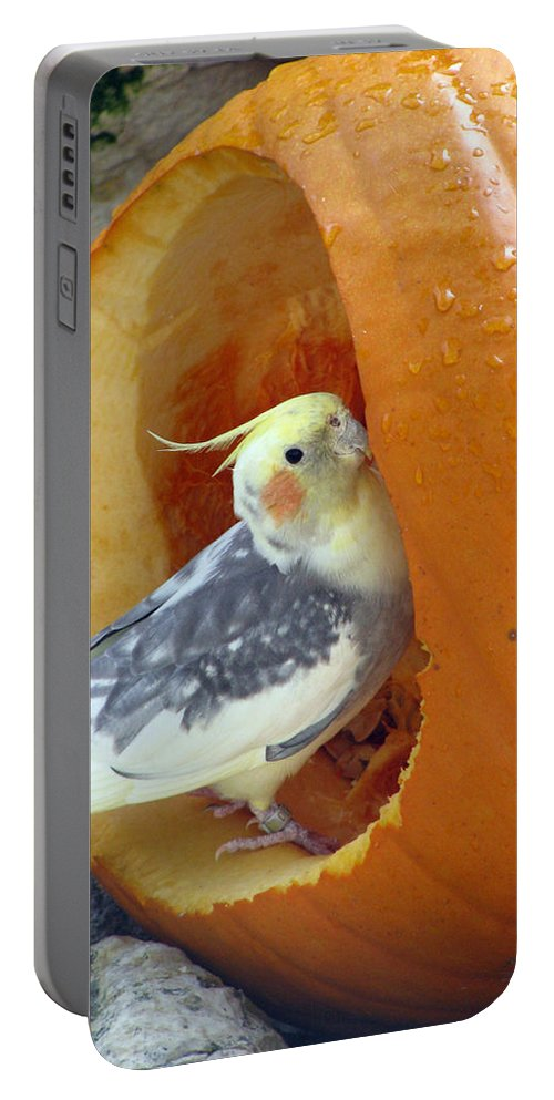 Cockatiel Portable Battery Charger featuring the photograph Cockatiel - Glutton by Pamela Critchlow