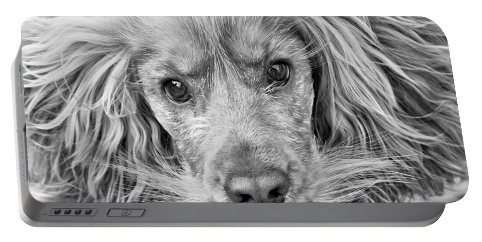 Red Portable Battery Charger featuring the photograph Cocker Spaniel Dog Black And White by Brch Photography