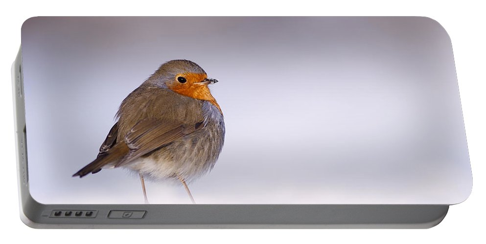 European Robin Portable Battery Charger featuring the photograph Cold Feet by Roeselien Raimond
