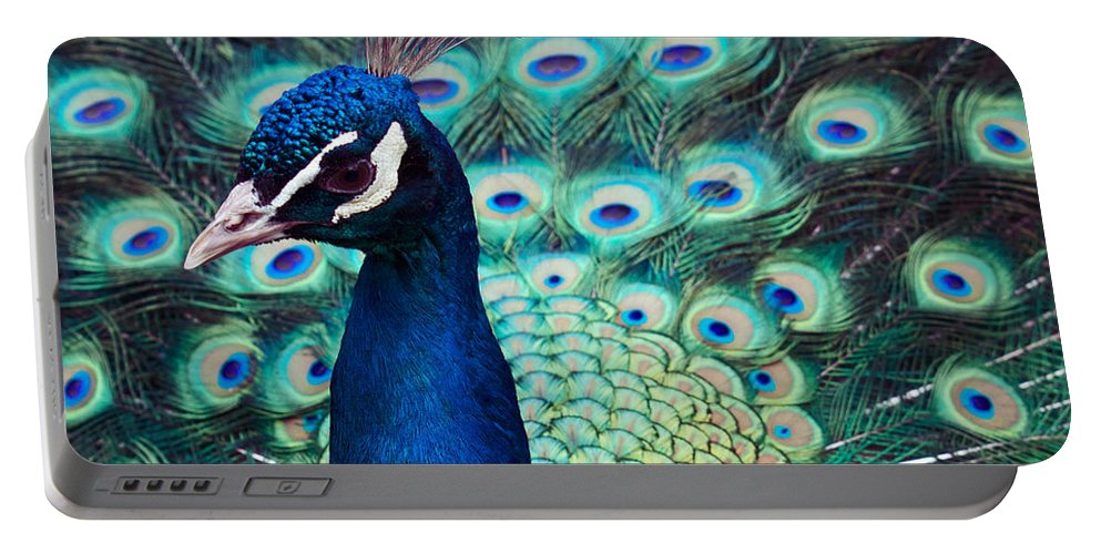 Peacock Portable Battery Charger featuring the photograph Color Me Peacock by Alice Gipson